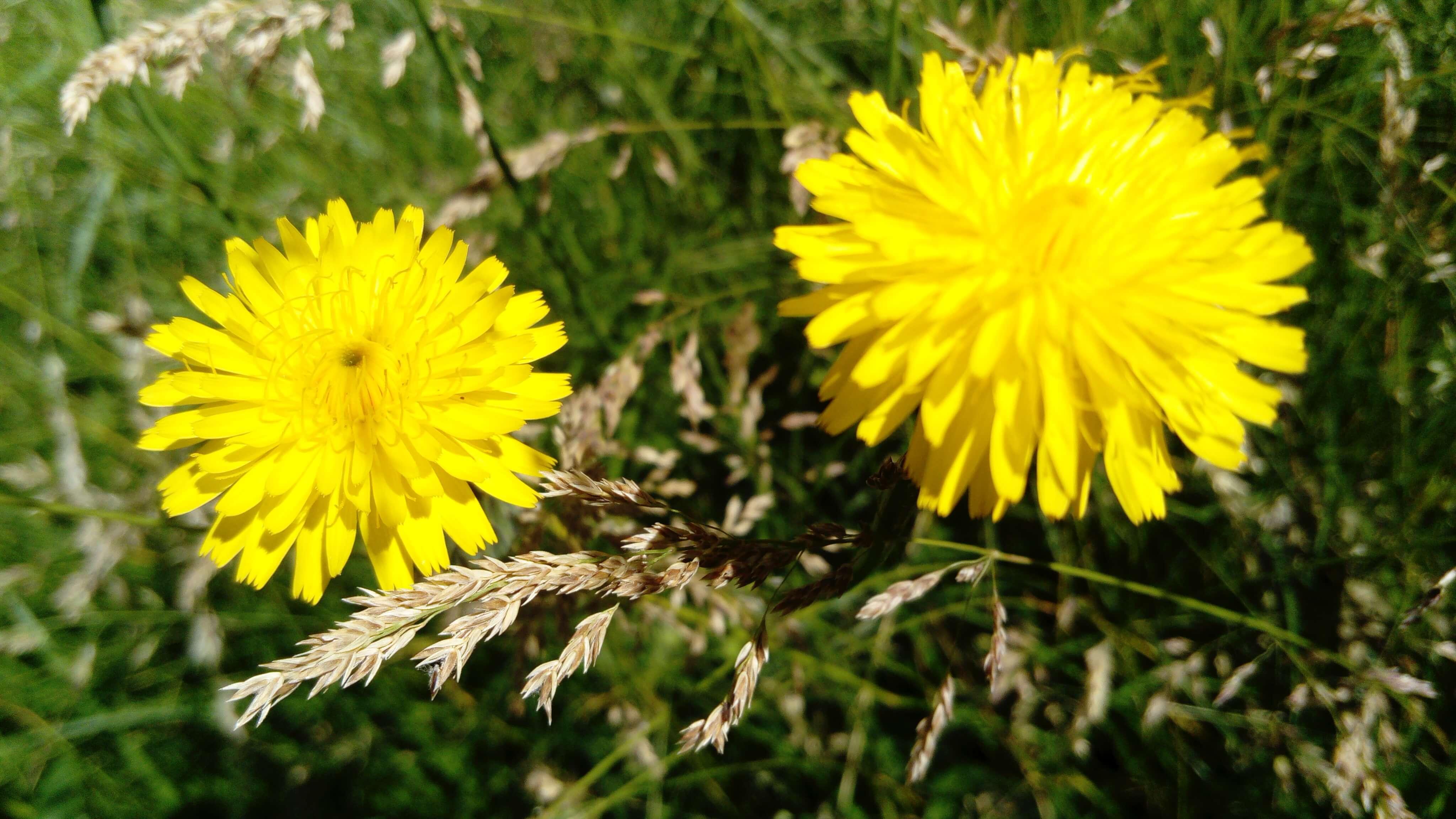 2 fleurs jaunes